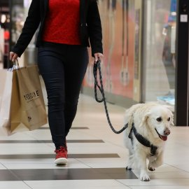 JSE-listed EPP is leading new lifestyle trends with pet-friendly malls