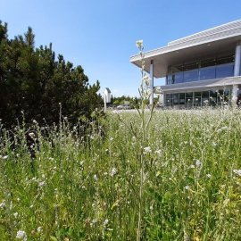 Flower meadows bring EPP's shopping centres closer to nature